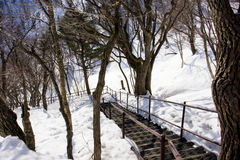 Bridge in snow Royalty Free Stock Photo