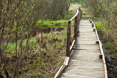 Bridge in a spring forest stock image