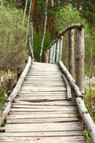 Bridge in a spring forest Royalty Free Stock Images