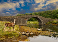 Bridge stag Stock Photos
