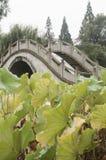 Bridge through lotus pond. Stone arch bridge through lotus pond at autumn Stock Photography