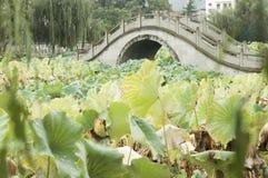 Bridge through lotus pond Royalty Free Stock Images