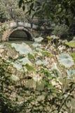 Bridge lotus pond  Stock Image