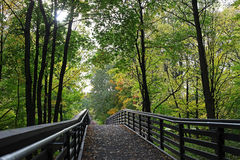 Bridge in the summer forest Royalty Free Stock Images
