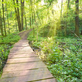 Bridge in the sunny green forest Stock Images