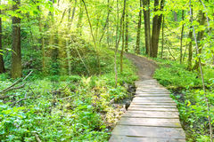 Bridge in the sunny green forest Stock Photos
