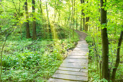 Bridge in the sunny green forest Royalty Free Stock Photos