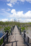 The bridge is surrounded by mangrove trees Stock Photos