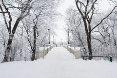 Bridge Surrounded By Snowy Tree Stock Photo