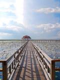 Bridge in the swamp lotus. Stock Photo