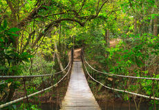 Bridge to the deep jungle Stock Images