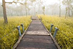 Bridge to forest. Wood bridge on grass field in Thailand Stock Photos