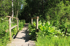 Bridge to forest Royalty Free Stock Photo