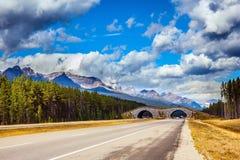Bridge to go wild animals across the highway Stock Photos