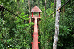 Bridge to jungle Stock Photos