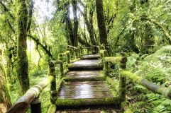 Bridge in to the jungle Royalty Free Stock Photography