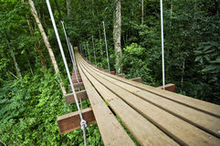 Bridge to the jungle,Thailand Royalty Free Stock Photography