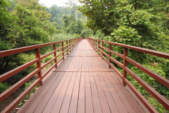 Bridge to the jungle,Thailand Stock Photography