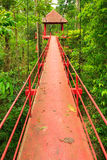 Bridge to the jungle,Trang,Thailand Stock Image