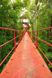 Bridge to the jungle,Trang,Thailand Royalty Free Stock Photos