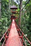 Bridge to jungle Royalty Free Stock Photography