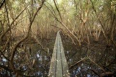 Bridge to mangrove forest Stock Photos