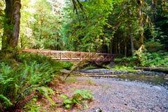 Bridge. To Marymere Falls, WA state Royalty Free Stock Photo