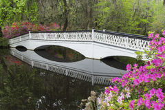 Bridge to Paradise. A long white wooden footbridge is framed by colorful azalea blooms, which are reflected in the calm waters of the pond, at the Magnolia stock photography