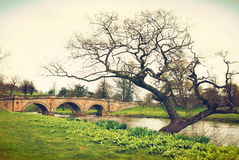 Bridge and Tree in Chatworth House Stock Image