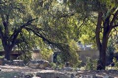 Bridge among trees Royalty Free Stock Images