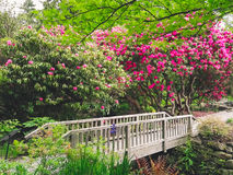 A bridge trees plants and flowers in a garden Royalty Free Stock Photos
