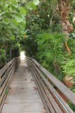 Bridge in tropical forest. Wooden bridge in tropical forest Stock Photography