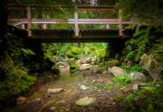 Bridge in the tropical forest Royalty Free Stock Photo