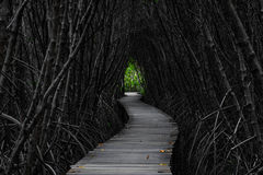 Bridge Tunnel. The tree becomes tunnel Covered bridge Stock Photography