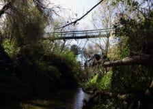Bridge Undergrowth Royalty Free Stock Photography