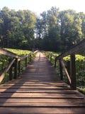 Bridge walk across sea of green. A calm relaxing bridge on a bed of green Stock Photos