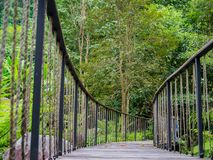 Bridge walk way in the forest.  Royalty Free Stock Images