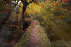 Bridge way in the woods. Royalty Free Stock Image
