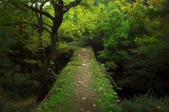Bridge way in the woods. Stock Image