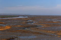 The bridge on the wetland near shanghai. Built the bridge along the muddy tidal flat, tidal flat is not damaged Royalty Free Stock Photos