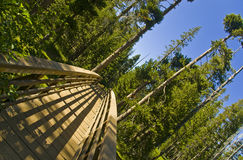 Bridge into the Wilderness royalty free stock photos