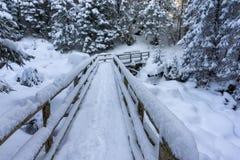 A bridge in a winter mountain forest. Tatra Mountains. A bridge in a winter mountain forest. Tatra Mountains Royalty Free Stock Photo