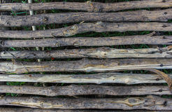 Bridge wood in farm Stock Photo
