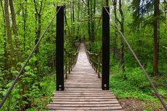 Suspension bridge made of wood and metal in the spring in the reserve. A bridge of wooden planks stretches through the trees with green leaves stock image