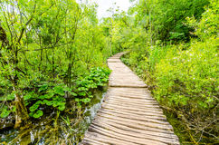 Bridge in the woods Royalty Free Stock Images