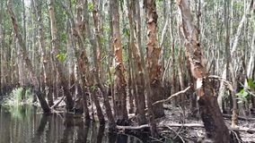 Discover the Melaleuca forest by boat stock video footage
