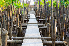 Bridge in young mangrove forest Stock Photos