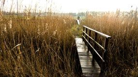 bridger Στοκ Φωτογραφίες