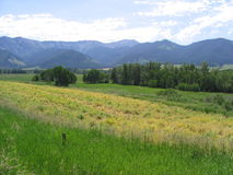 Bridger Range-Springhill 1. Bridger Ranger as viewed from Springhill Community with green summer fields and trees in the valley stock photos