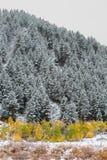 Bridger Teton National Forest Stock Images